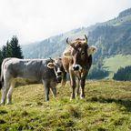 Alpenpanorama für Sportler und Naturfans in Oberstdorf