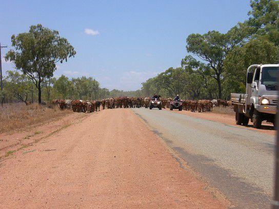 Stau im Outback