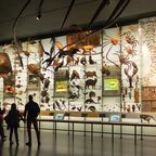Besucher im American Museum of Natural History