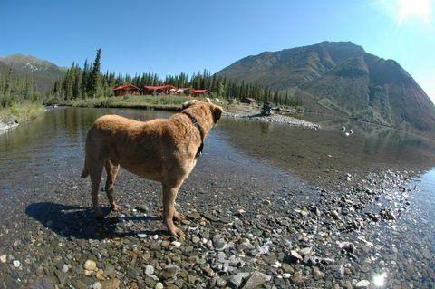 Tincup Lake Lodge