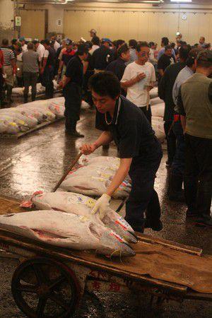 Tskiji, Fishmarket Tokyo