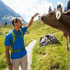 sich mit einer Kuh anfreunden