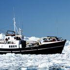 Schiff sucht sich einen Weg in den Hafen von Ilulissat
