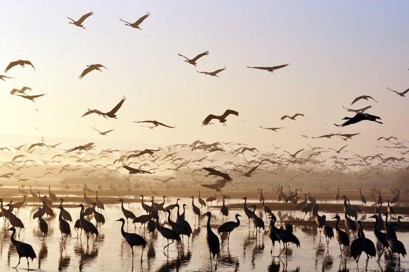 Zugvögel in der Chulaebene