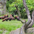 Der Tierpark Kolmården in Schweden