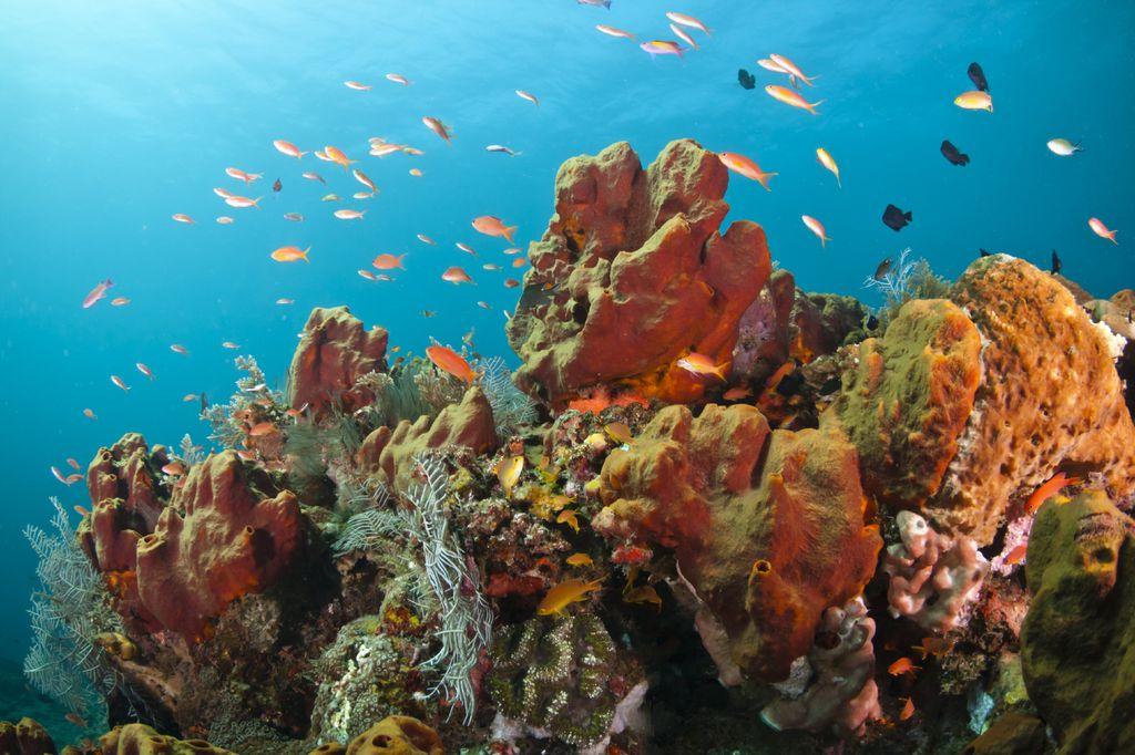 Farbenfrohes Korallenriff