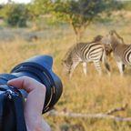 Safari: Über kurz oder lang