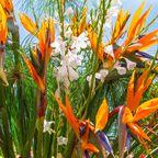 Blumeninsel im Atlantik