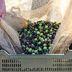 Olivenöl, das grüne Gold Italiens