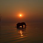 Elefant im Sonnenuntergang