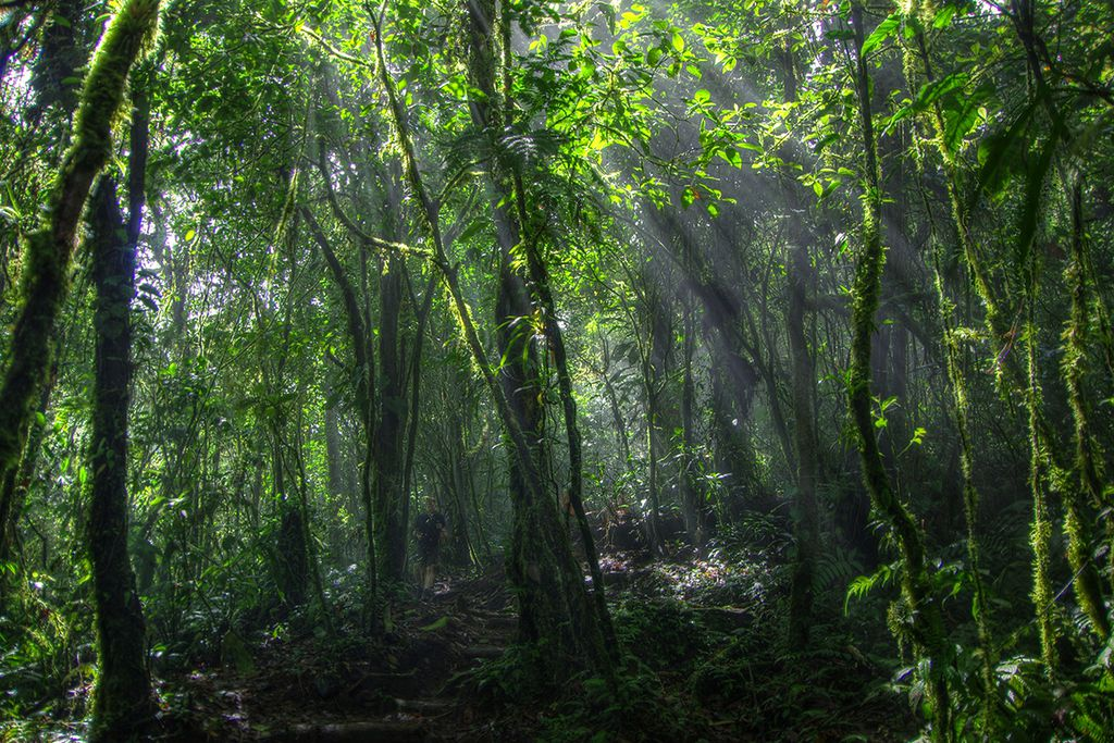 Die Wälder des Cerro Chato, ein 1140m hoher Vulkan im Nord-Westen Costa Ricas.
