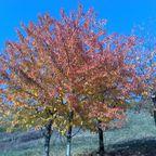 Bunte Herbst-Impressionen