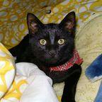 Katze im Bett erwischt