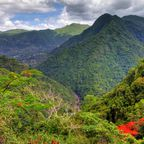 Besuch im Regenwald