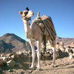 Kamel Sinai.jpg