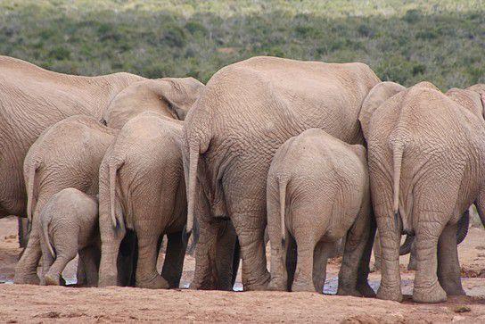 Elefantenärsche :o)