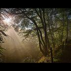 Morgens im tiefen Wald