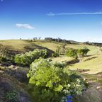 Rinder-Weiden in New South Wales
