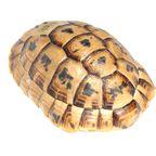 Produkte aus toten Meeresschildkröten als Mitbringsel stehen in Kenia unter Strafe.