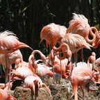Flamingos im Zoo von Barcelona
