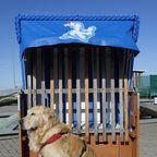 """Danny der """"Nordsee""""-Retriever am Strand von Carolinensiel-Harlesiel"""
