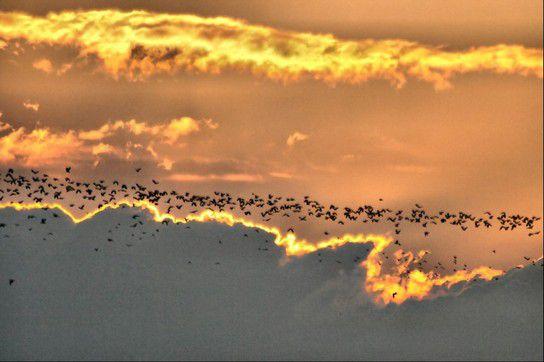 An der Vogelfluglinie