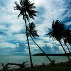 Palmen im Gegenlicht