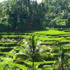 Zurück zur Bilderübersicht Bali