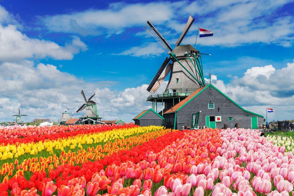 Höchstentwickelte Länder der Welt, Platz 7: Niederlande
