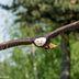 Falconeria Locarno