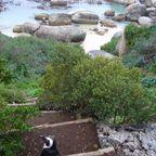 Die Pinguine mögen es warm :)