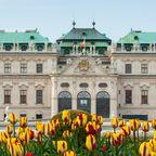 Das Belvedere Schloss im Frühling