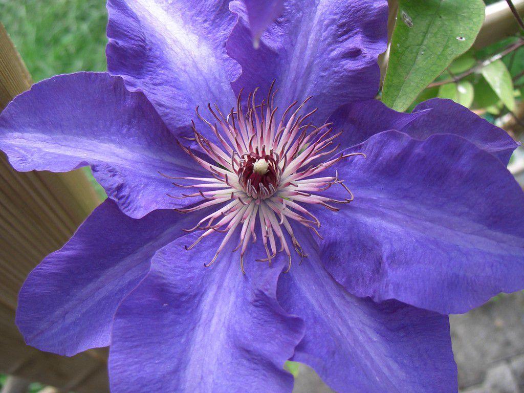 Blumen 2008