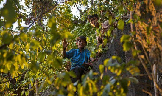 Kinder in der Baumkrone