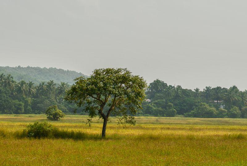 Grüne Landschaft in Goa