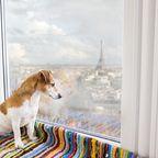Urlaub mit Hund in Frankreich