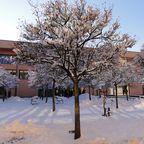 Der schöne Winter