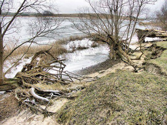 Winter 2009 an der Boddenküste