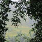 Blick auf Reisterrassen in Sapa
