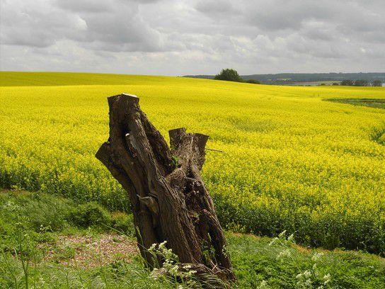 Im Norden wirds gelb