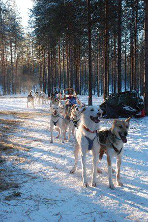 Schlittentour in Finnland