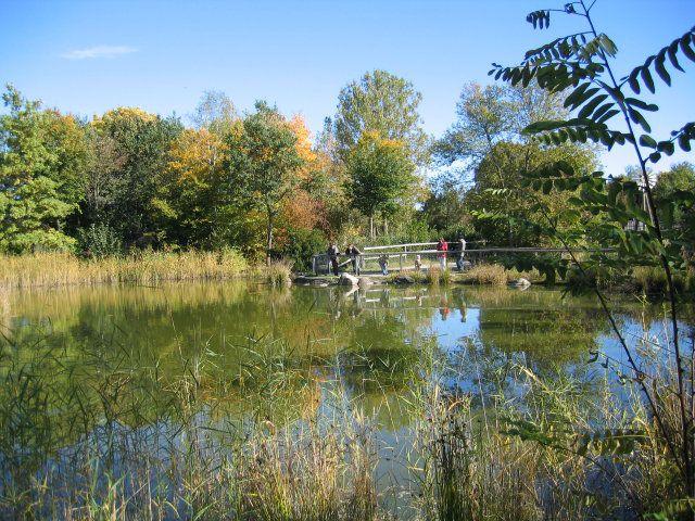 der wunderschön angelegte Teich