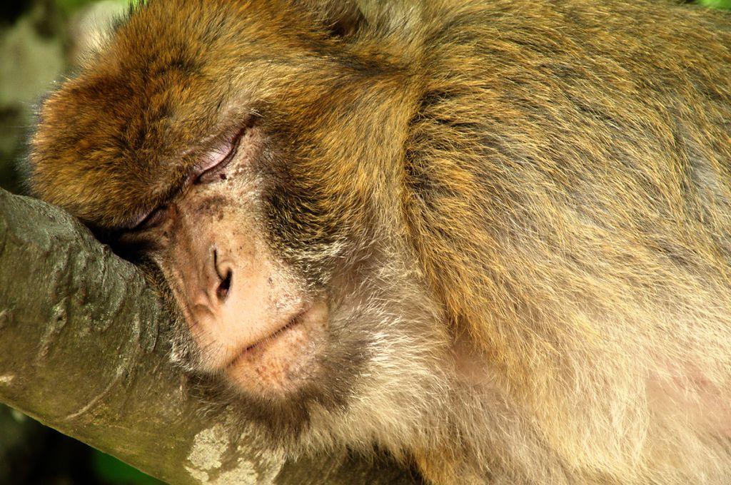 Für Kinder sind die Affen in Salem ein echtes Highlight