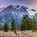Erste Welterbestätten: Yellowstone-Nationalpark
