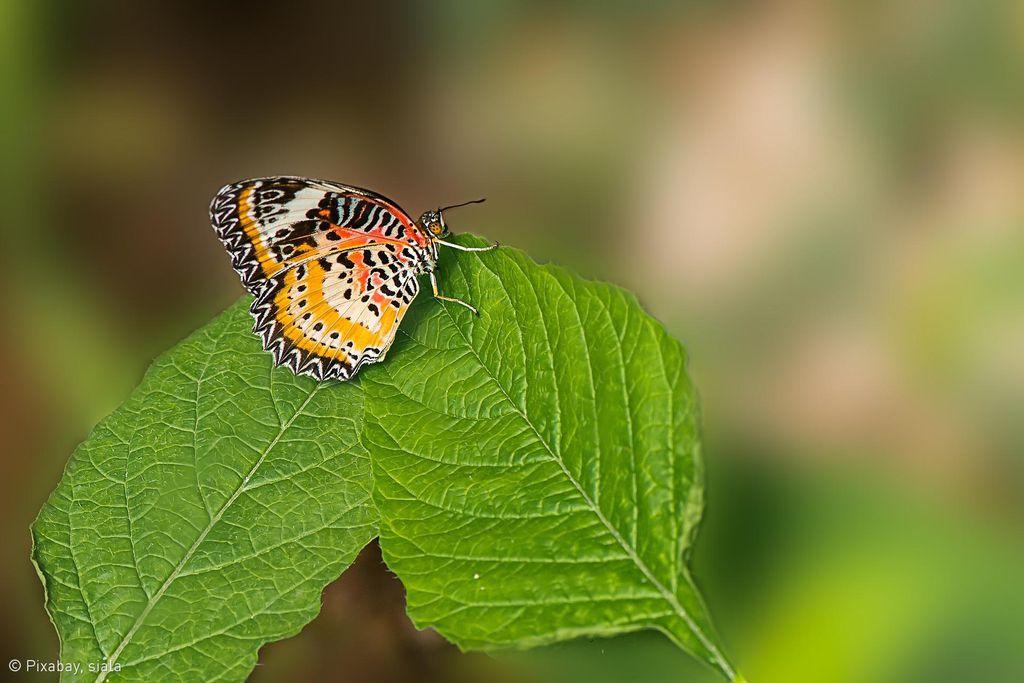 Banteay Srey Butterfly-Farm