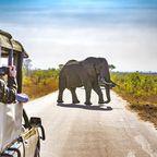 Highlights der Rundreise durch Südafrika: Kruger-Nationalpark