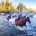 Saskatchewan: Ein Sonnenparadies mit Cowboy-Romantik