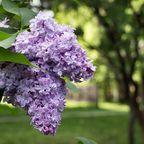 United States Botanic Garden: Nachhaltige Blütenpracht