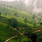 Zurück zur Bilderübersicht Sri Lanka