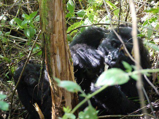Kweitonda am Baum - Wildlife